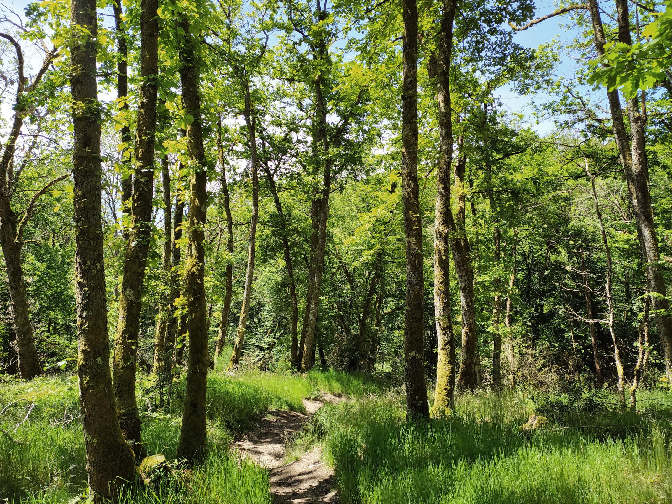 randonnée parc naturel du Morvan